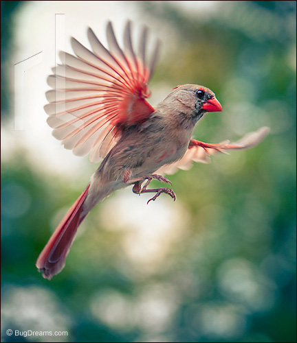 A Cardinal bends others to her will