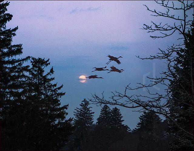 Lieder_Moonrise-Cranes_640.jpg