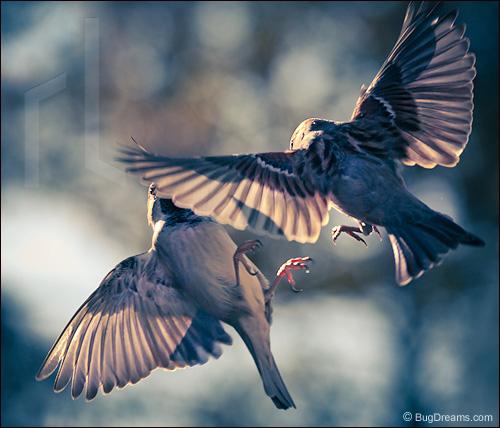 Lieder_Sparrow_161010b.jpg