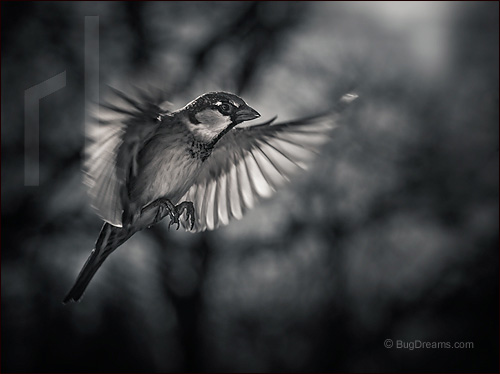 A songbird searches for spring