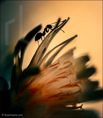 An ant navigates the underworld with one eye half-shut