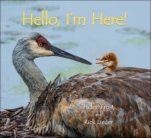 Book launch for HELLO, I'M HERE!