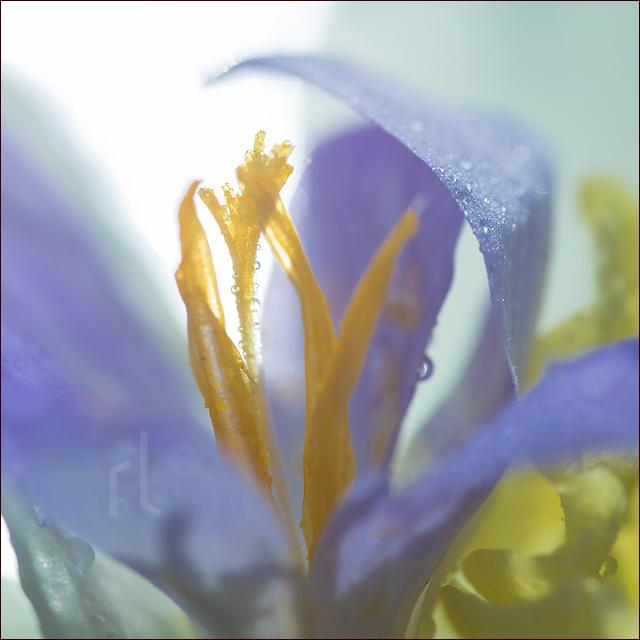 Lieder_Pollen_2503219_640.jpg