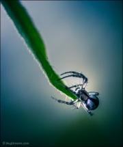 Spider waiting on leaf